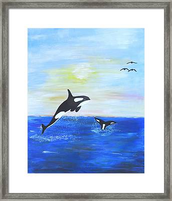 Killer Whales Leaping Framed Print
