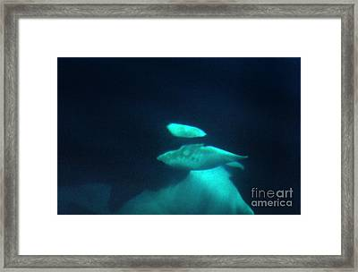 Framed Print featuring the photograph Killer Whales Orcas Under Water  Off The San Juan Islands 1986 by California Views Mr Pat Hathaway Archives