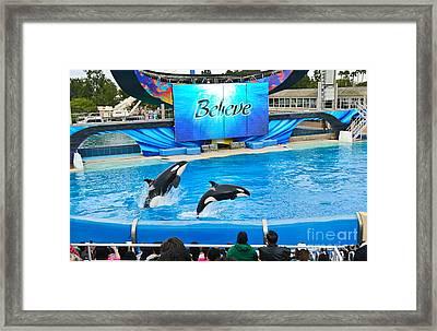 Killer Whales Perform In Shamu Stadium At Seaworld. Framed Print by Jamie Pham
