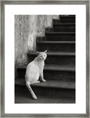 Framed Print featuring the photograph Kimba by Laura Melis