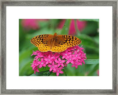 Framed Print featuring the photograph Kim's Bosom Buddies Support by Richard Bryce and Family