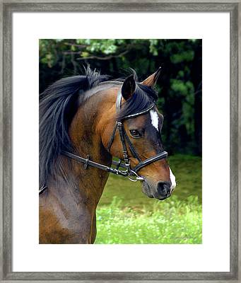 Kind Eye Willing Heart Framed Print