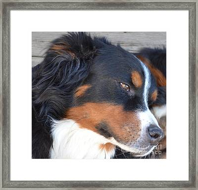 Framed Print featuring the photograph Kindness by Barbara Dudley