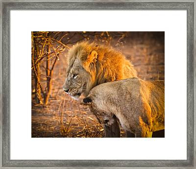 King And Queen Framed Print by Adam Romanowicz