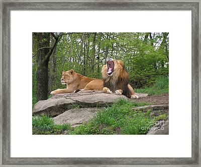King And Queen Of The Jungle Framed Print