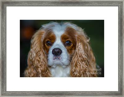 King Charles Framed Print