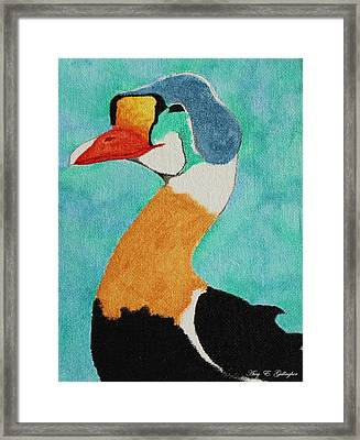 King Eider Framed Print