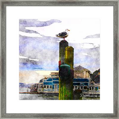 Sausolito Gull Framed Print