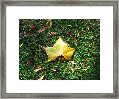 King Leaf Framed Print