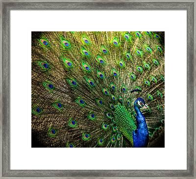 King Of Birds Framed Print by Karen Wiles