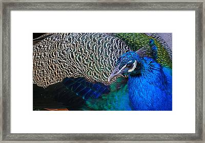 King Of Colors Framed Print by Evelyn Tambour