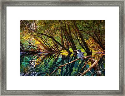 King Of North Chick Framed Print by Steven Llorca