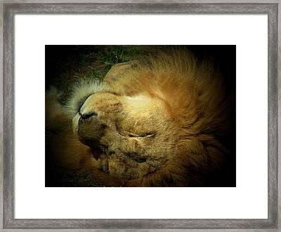 King Of Peace,lion Framed Print