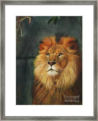 King Of Taronga - Watercolor Framed Print by GD Rankin