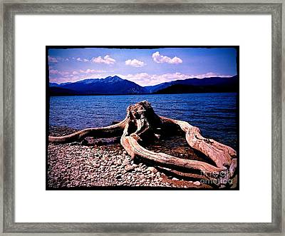 King Of The Driftwood Framed Print by Garren Zanker