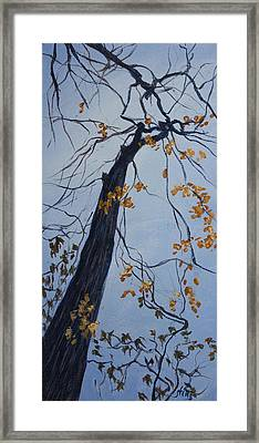 King Of The Forest Framed Print by Janet Felts