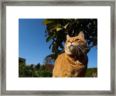 King Of The Garden Framed Print