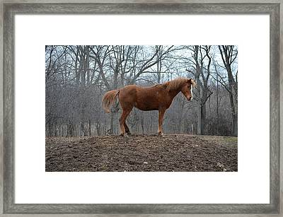 King Of The Hill Framed Print by Jennifer  King