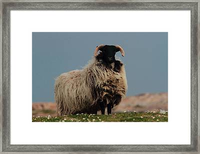 King Of The Hill Framed Print by Peter Skelton