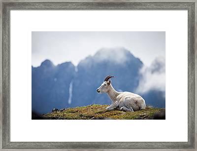 Mountain Prince Framed Print