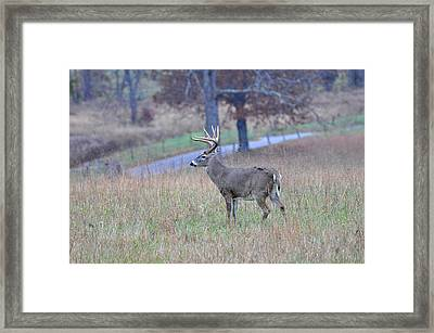 King Of The Hill Framed Print by Todd Hostetter