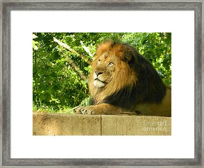 Framed Print featuring the photograph King Of The Jungle by Emmy Marie Vickers