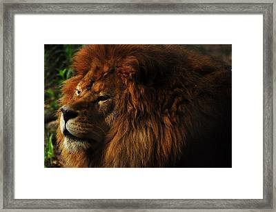 King Of The Jungle Framed Print by Valarie Davis