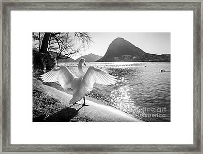 King Of The Lake Framed Print by Ning Mosberger-Tang