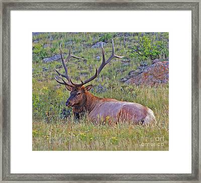 King Of The Meadow Framed Print