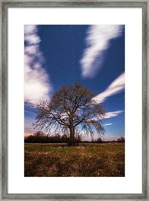 King Of The Night Framed Print by Davorin Mance