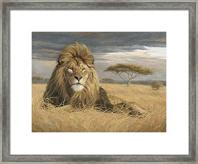 King Of The Pride Framed Print by Lucie Bilodeau