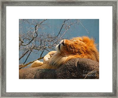 King Of The Rock Framed Print