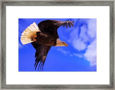 King Of The Sky Framed Print