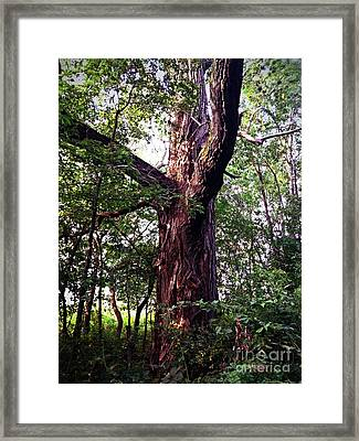 King Of The Timberline Framed Print