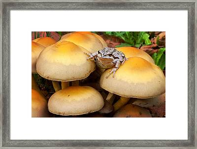King Of The Toads Framed Print