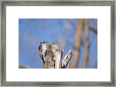 Framed Print featuring the photograph King Of The Tree Top by Dacia Doroff