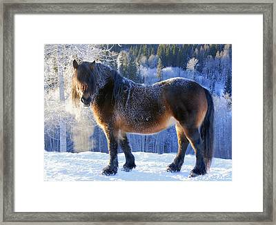 King Of The Valley Framed Print by Annicawesterlund