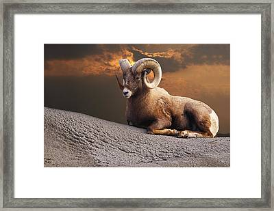 King On The Mountain Framed Print by David Simons