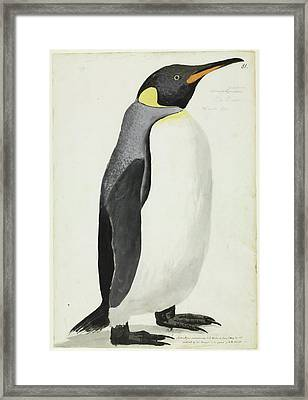 King Penguin Framed Print by Natural History Museum, London