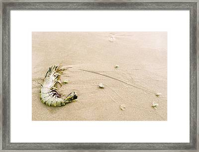 King Prawn And Plough Snails Framed Print by Peter Chadwick