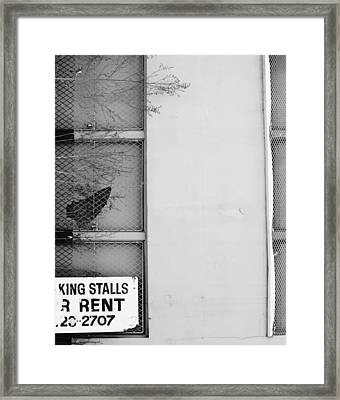 King Stall Framed Print by Jerry Cordeiro