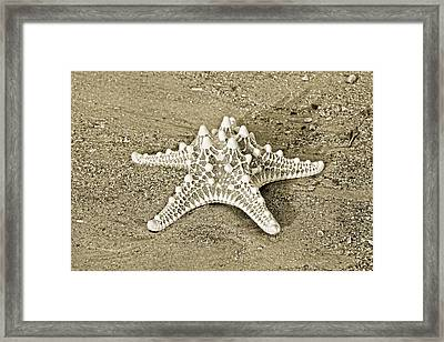Kingdom Of Animalia Framed Print by Betsy Knapp