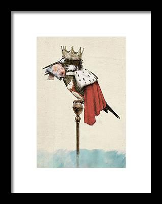 Kingfisher Framed Prints