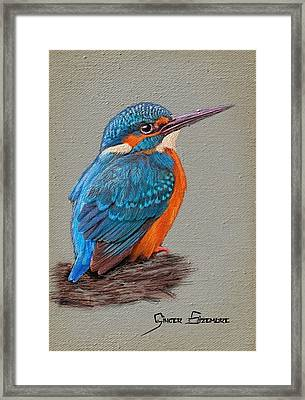 Kingfisher In Stitches Framed Print by Ginger Sizemore