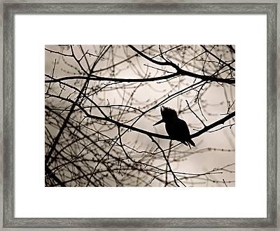 Kingfisher Silhouette Framed Print