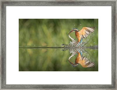 Kingfisher With Catch. Framed Print by Andy Astbury