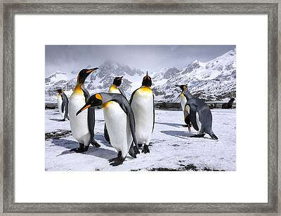 Kings At Right Whale Bay Framed Print by Oliver Prince