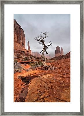 King's Tree Framed Print by David Andersen
