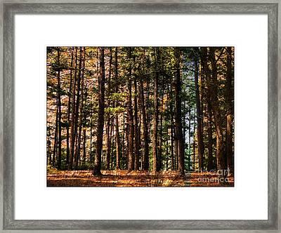 Kingston Forest Framed Print by Marcia Lee Jones