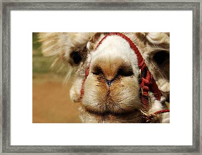 Framed Print featuring the photograph Kiss Kiss by Tamyra Crossley